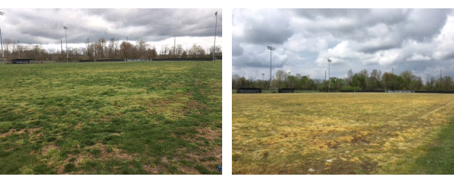 Photos of Dead Grass on Berea College's Field