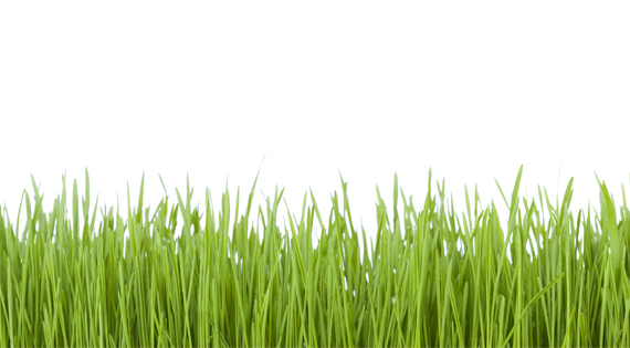Synthetic Turf Paints