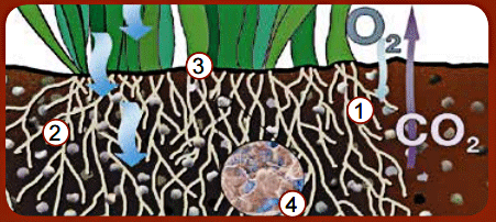 Turf Soil Conditioner Illustration