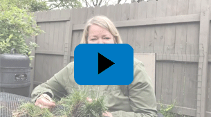 STEM Lawn Care for Kids! Episode 4: Turf ID