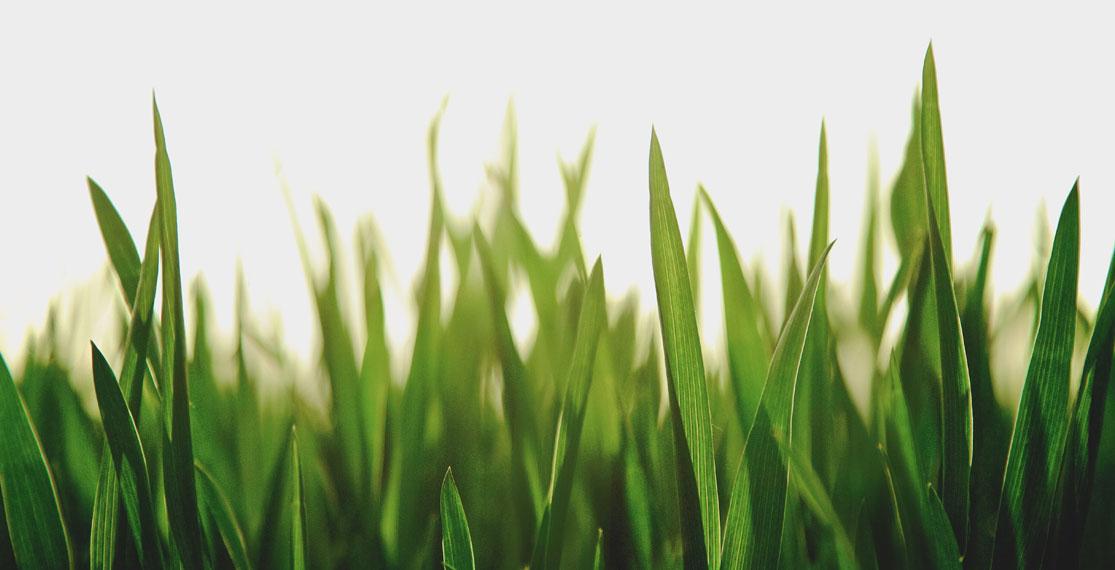Fertilizer for grass