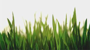 Organic vs. Inorganic Fertilizer
