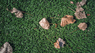 Turf Tips: Synthetic Turf Maintenance Guide