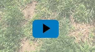 STEM Lawn Care for Kids! Episode 3: Seeding